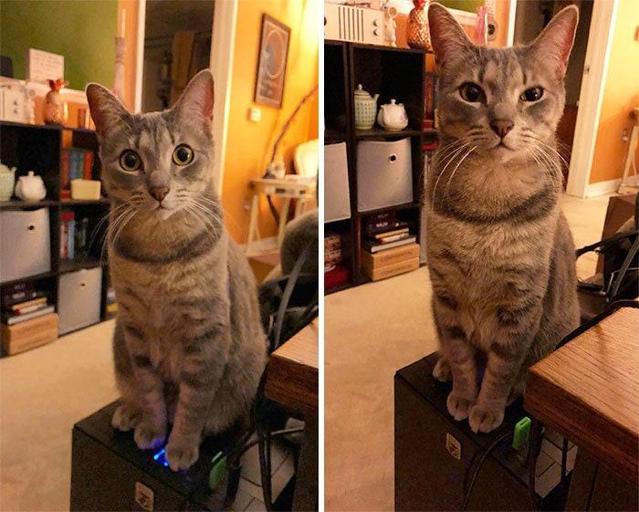 20. «Если у вас есть кошка, не покупайте компьютер с кнопкой питания, находящейся наверху»
