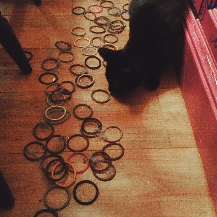 22. «Кот спрятал под мебель более 100 моих резинок»