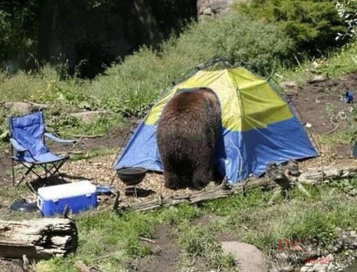 Главное – вовремя выйти из палатки
