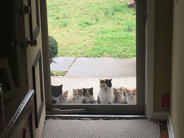 2. Две недели назад мы начали выставлять еду для бездомных кошек, теперь они собираются в определенное время в ожидании.