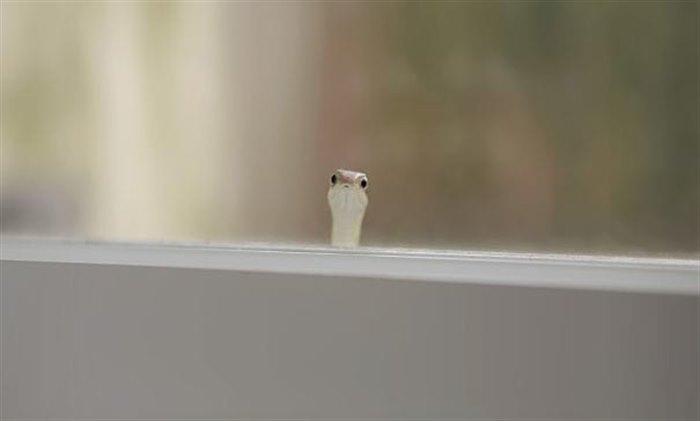 9. «Интересно, у нас тут новые соседи?»