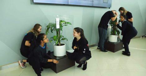 одно растение