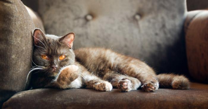 Как разгадать язык кота? Краткий человеко-кошачий словарь
