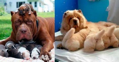 в собачьих семьях