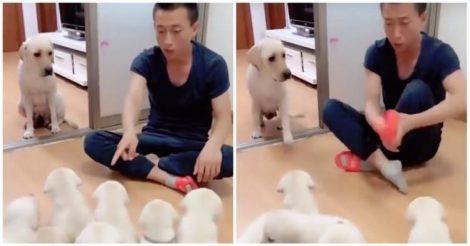 мамы-собаки