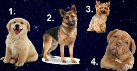 выбери собаку