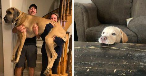 17 собак вас приободрят!
