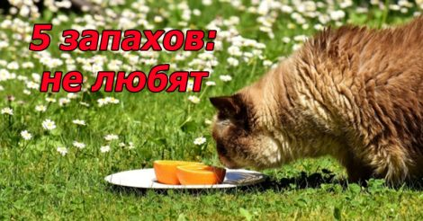 5 запахов не нравятся котам