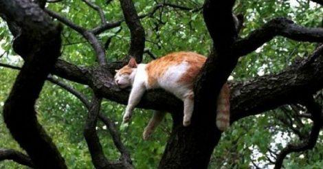 Кошки росли на деревьях