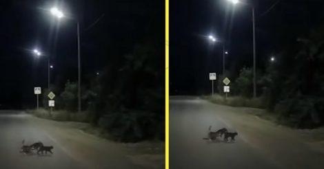 две кошки помогли собаке