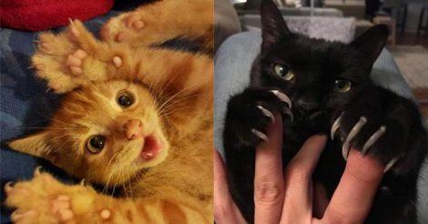 9 домашних котиков