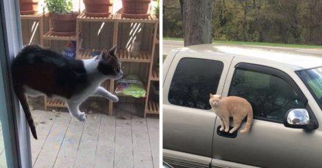 Законы физики коты