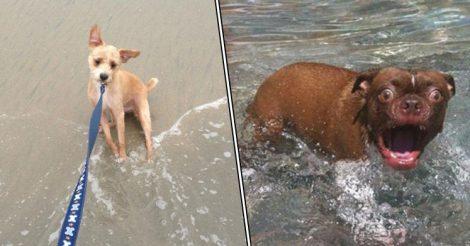 Большинство собак вода