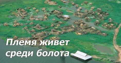 Жизнь среди болота