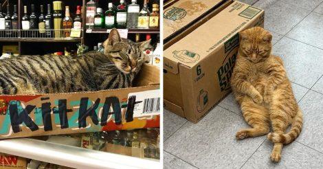 16 котов-продавцов