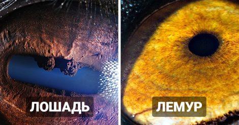 Макроснимки глаз животных