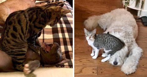 Нахальные коты