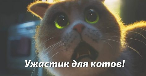 ужастик для котов