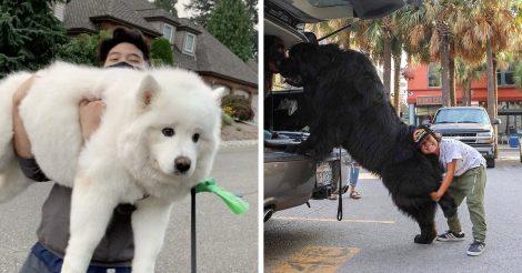 Крупные породы собак