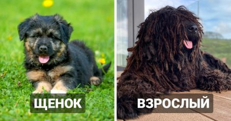 10 пород собак