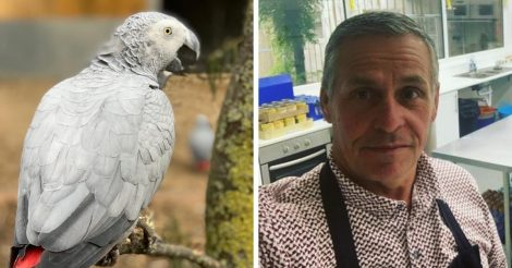 Зоопарк спрятал попугаев-жако