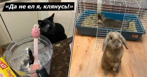 Животные могут быть хитрыми