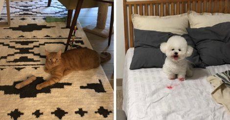 Домашние животные напугали
