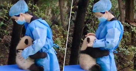 обняла панду для утешения