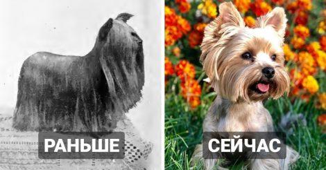 Собаки 100 лет назад