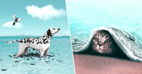 Сюрреалистичные снимки животных