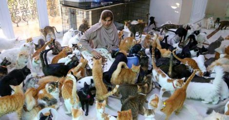 480 кошек, 12 собак