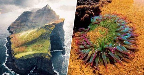 Природа отличается безудержной фантазией