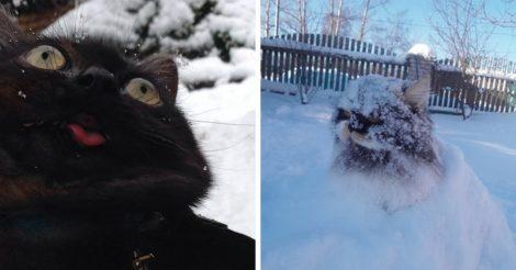 Реакция котов на снег