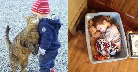 10 причин завести животное