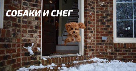 Собаки и зима