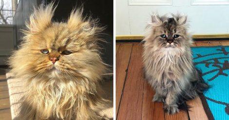 Кот по прозвищу Барнаби