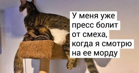 больше одного кота