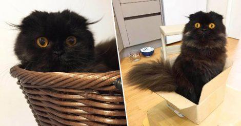 кот с огромными глазами