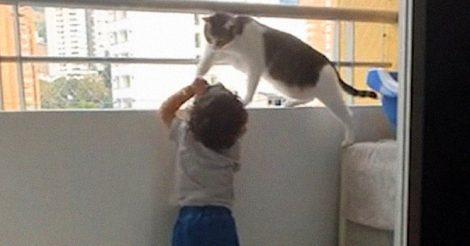 Заботливый кот не дает ребенку