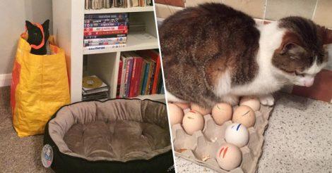 Где спят ваши коты