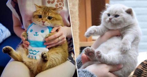 Откормленные котики