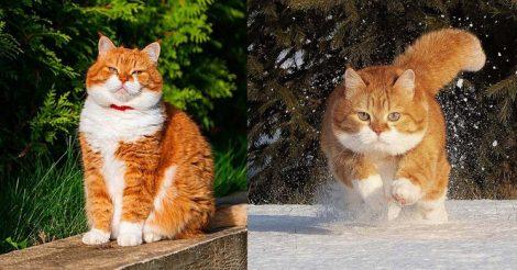 у красивого кота хозяин – фотограф