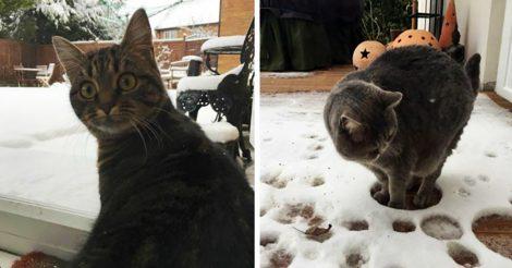 Котики впервые увидели снег