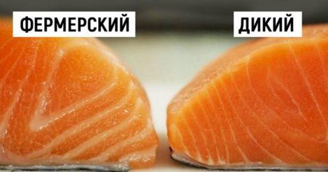 выбрать настоящий лосось