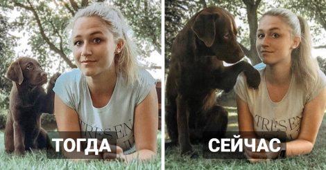 Милые щеночки