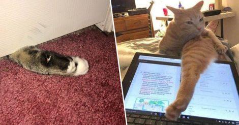 Глупые выходки смешных котиков