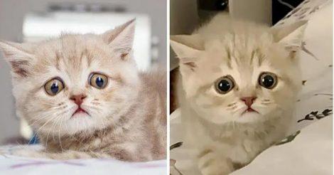 Котенок с огромными глазками