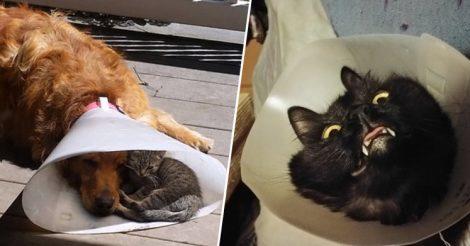 ветеринарный конус поменял их жизнь