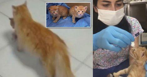 принесла котят в больницу