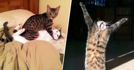Смешные мартовские котики